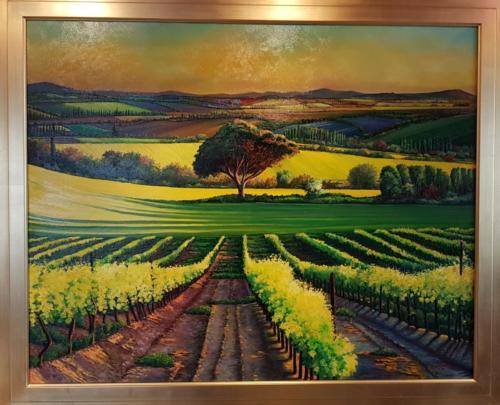 Weinberge in der Provence - Frankreich