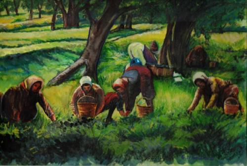 Frauen bei der Ernte