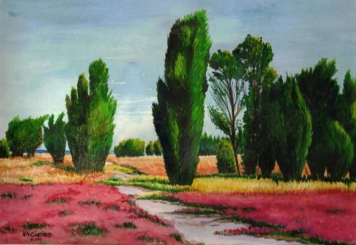 Zypressen - Provence