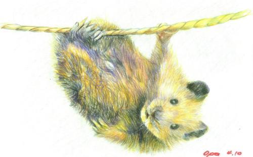 Seilartist Hamster