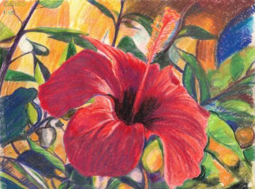 rote Hibiskus Blüte