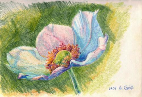 weiß-rosa Blüte