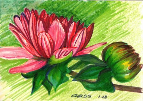 Rote Blüten am Zweig